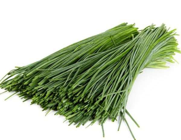 What is jusai, how it is useful, how it is grown and applied